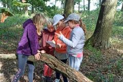 Přírodovědná poznávací vycházka do lesa